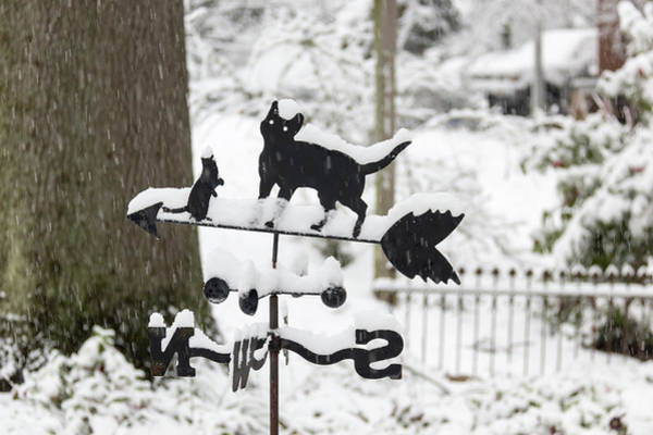 Wall Art - Photograph - Winter In Spring Feline Weathervane by Keith Mucha