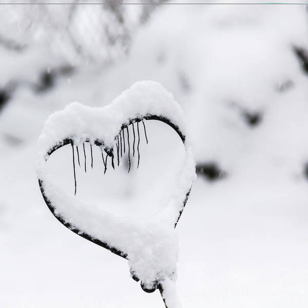 Wall Art - Photograph - Winter In Spring Frozen Heart by Keith Mucha