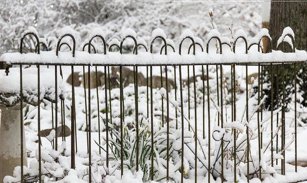 Wall Art - Photograph - Winter In Spring Garden Fence by Keith Mucha