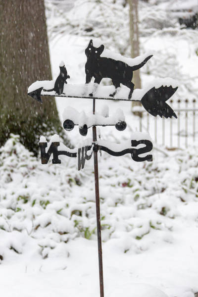 Wall Art - Photograph - Winter In Spring Kitty Weathervane by Keith Mucha