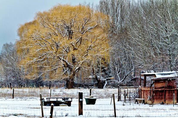 Photograph - Winter In Taos by Robert Woodward