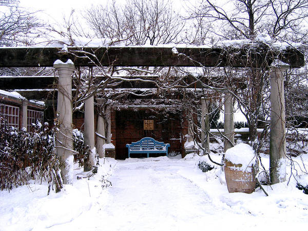 Photograph - Winter In The Garden by Laura Kinker