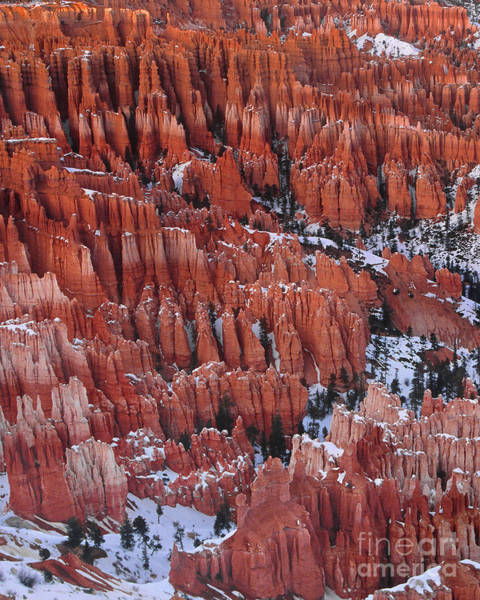 Photograph - Winter Inspiration Point Bryce Canyon National Park  Utah by Dave Welling