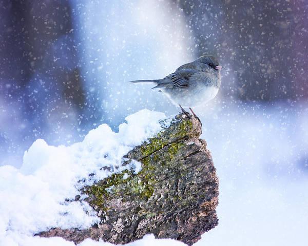 Dark Eyed Junco Photograph - Winter Junco On Stump by Bill Tiepelman