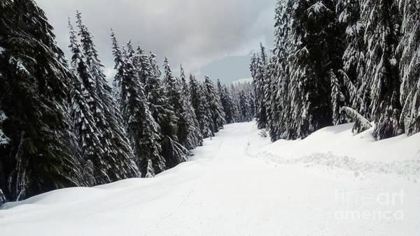 Photograph - Winter Landscape by Bill Thomson