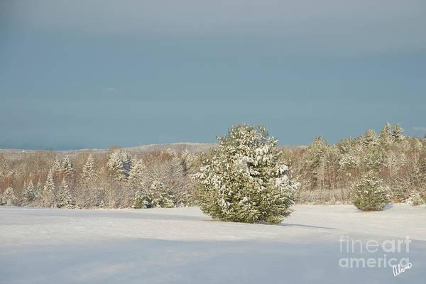 Photograph - Winter Landscape by Alana Ranney