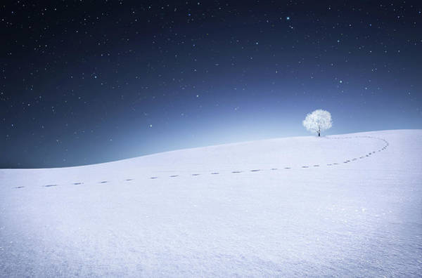 Ski Tracks Wall Art - Photograph - Winter Landscape by Bess Hamiti