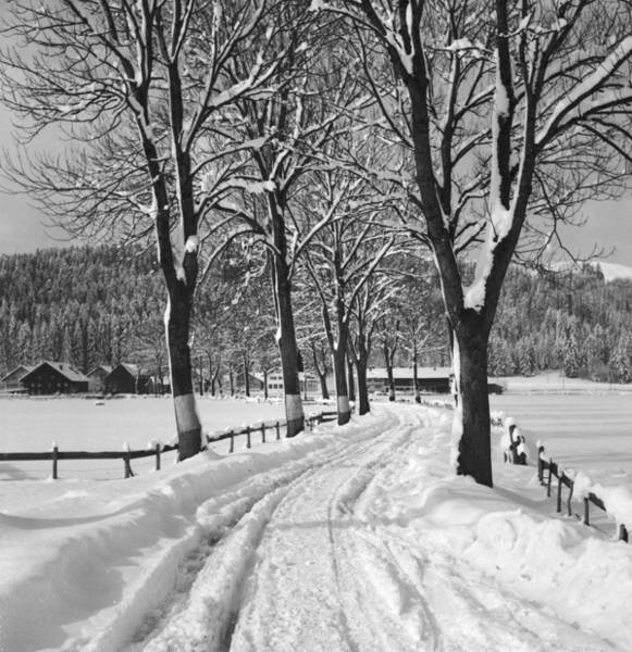 Wintry Photograph - Winter Landscape by German School