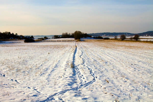 Photograph - Winter Landscape by Lutz Baar
