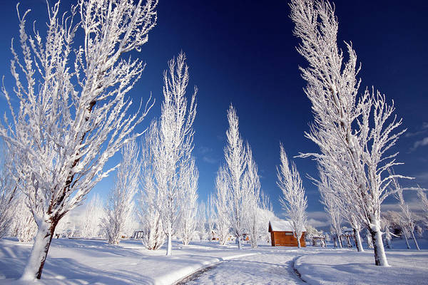 Photograph - Winter Landscape by Wesley Aston