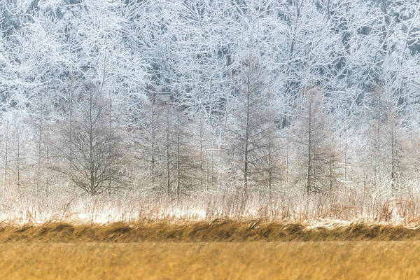 Photograph - Winter Layers by Patti Deters