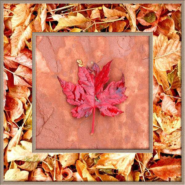Photograph - Winter Leaf In Leaves by James Granberry