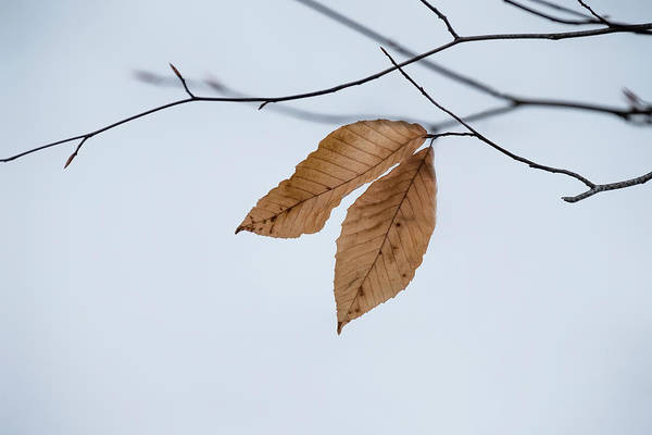 Photograph - Winter Leaves by Tom Singleton