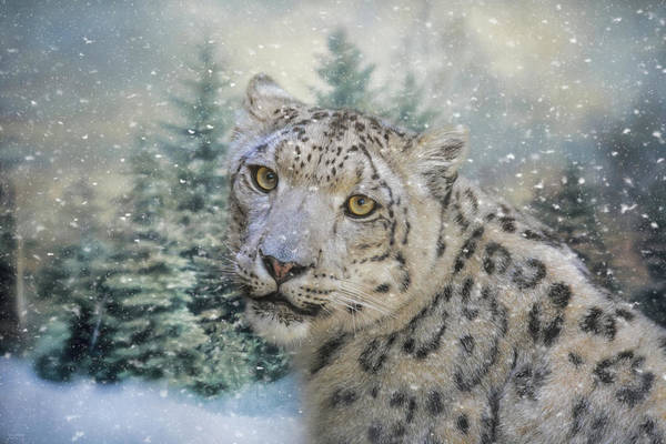 Photograph - Winter Leopard by Jai Johnson