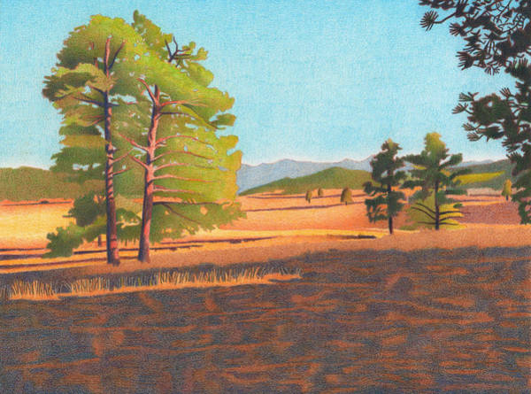 Evergreen Trees Drawing - Winter Light by Dan Miller