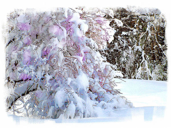 Wall Art - Photograph - Winter Lilac by Rose Guay