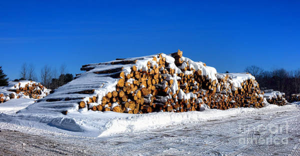 Wall Art - Photograph - Winter Logs by Olivier Le Queinec