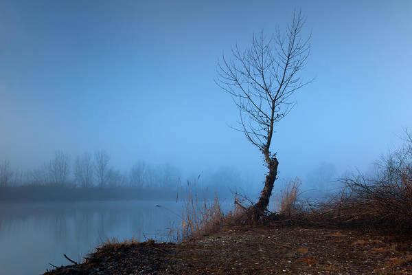 Photograph - Winter Loner by Davor Zerjav