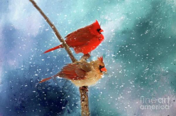 Female Cardinal Photograph - Winter Love by Darren Fisher