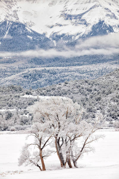 Photograph - Winter Magic by Denise Bush