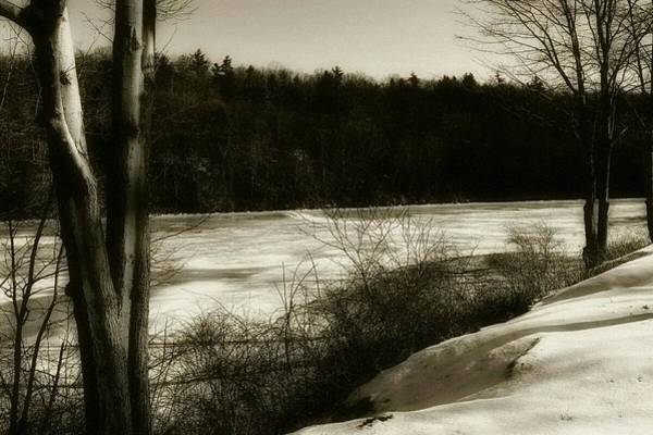 Clarion Photograph - Winter Magic In Cook Forest by Shelley Smith