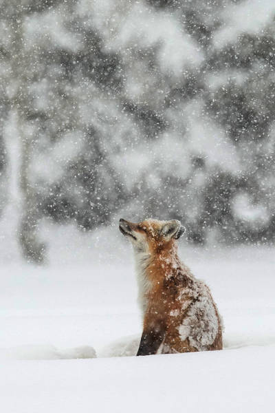 Snowstorm Wall Art - Photograph - Winter Magic by Sandy Sisti