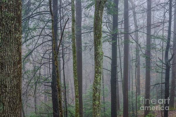 Photograph - Winter Mist In The Forest by Thomas R Fletcher