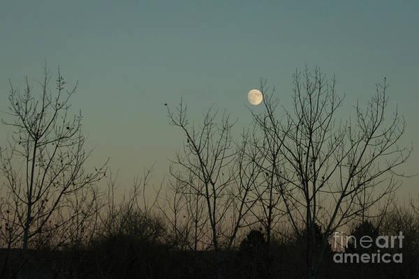 Photograph - Winter Moon by Ana V Ramirez