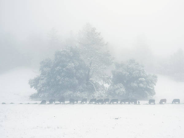 Photograph - Winter Morning Feed by Alexander Kunz