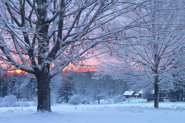 Wall Art - Photograph - Winter Morning by John Burk