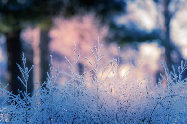 Winter Morning Light Art Print