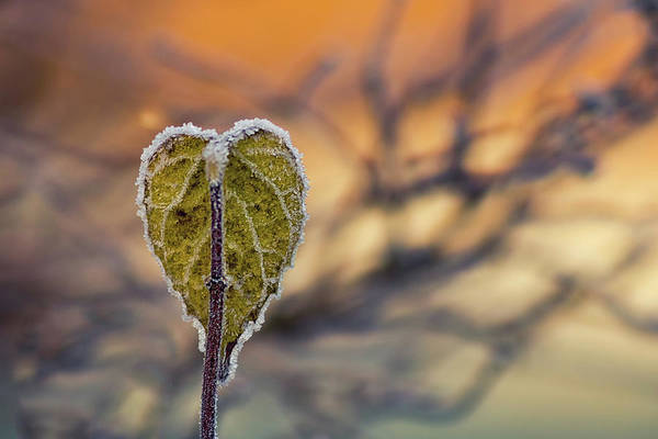 Wall Art - Photograph - Winter Morning by Stelios Kleanthous