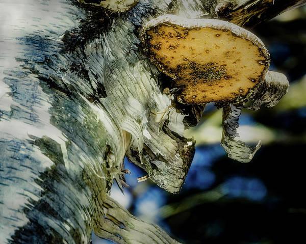 Winter Mushroom Art Print