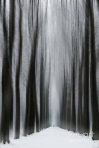 Photograph - Winter Mystery by David Lichtneker