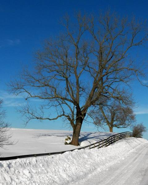 Wall Art - Photograph - Winter On A Country Road by Joyce Kimble Smith