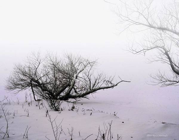 Photograph - Winter On The Illinois River by Coleman Mattingly
