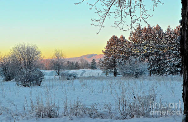 Photograph - Winter On The Tree Farm by Cindy Schneider