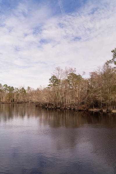 Photograph - Winter On The Waccamaw River by MM Anderson