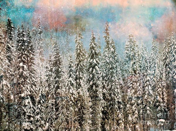 Photograph - Winter Pastels by Tara Turner