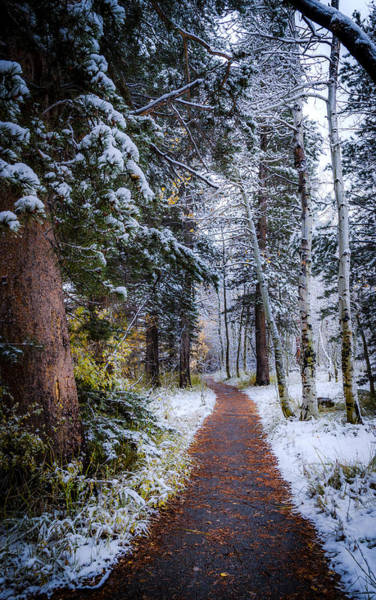 Photograph - Winter Path by Cat Connor