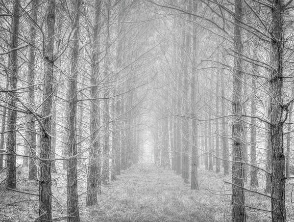 Photograph - Winter by Philip Rispin