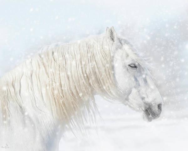 Andalusian Stallion Wall Art - Photograph - Winter by Phyllis Burchett