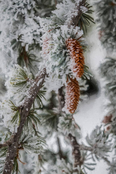 Photograph - Winter Pine Cones by Lou Novick