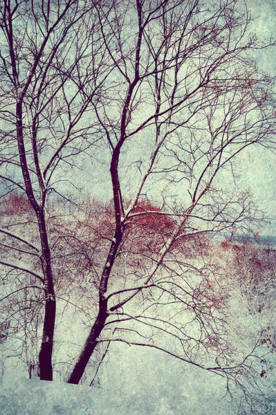 First Snowfall Wall Art - Photograph - Winter Poem by Jenny Rainbow