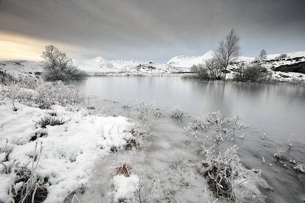 Photograph - Winter Pond by Grant Glendinning