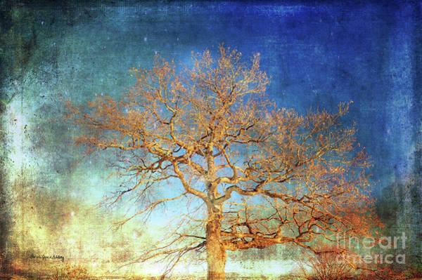Photograph - Winter Promise by Randi Grace Nilsberg
