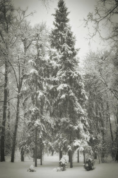 Photograph - Winter Quiet. Chernihiv, 2013. by Andriy Maykovskyi
