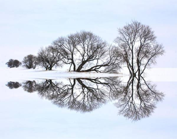 Photograph - Winter Reflection  by David Matthews