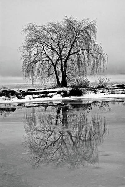 Photograph - Winter Reflections by Peter Pauer