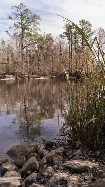 Photograph - Winter Riverbank On The Waccamaw by MM Anderson